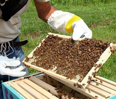 Bee Farm on Phu Quoc near Peppercorn Beach