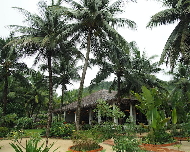 Tropical Garden and coconut trees in Phu Quoc