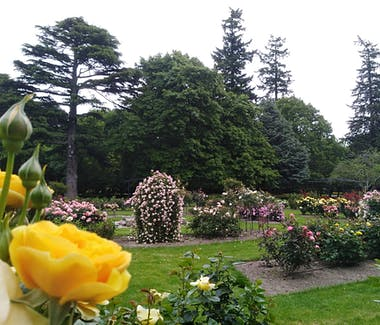 Rose Garden at Ashburton Domain