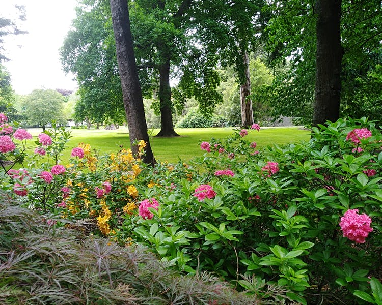 Ashburton Gardens & Domain,A great walk through Gardens are beautiful too and always well maintained all year round.