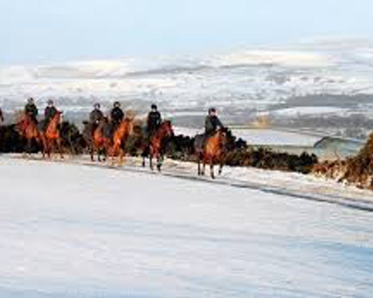 Middleham racehorses walking in the snow on the Yorkshire Dales