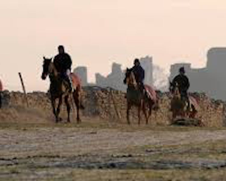 Middleham Racehorses walking in the Yorkshire Dales with Middleham Castle in the background