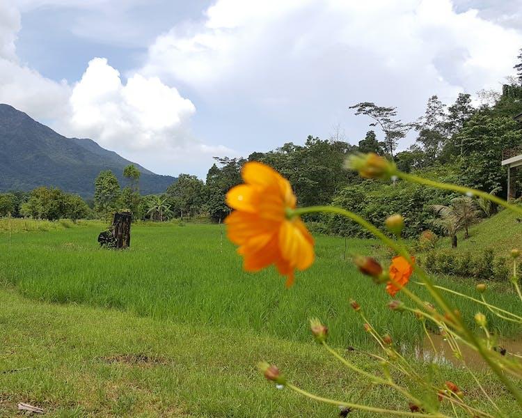 Gallery | Sheridan Organic Farm and Eco Village