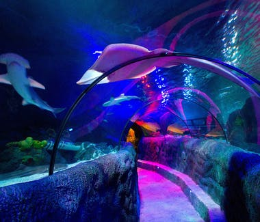 Loch Lomond Aquarium Attraction