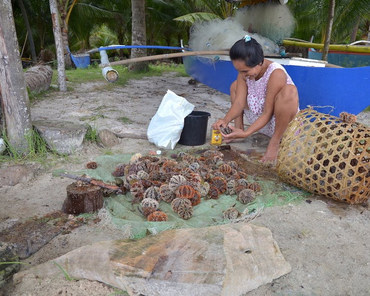 White-Villas-Resort-Siquijor-Island-Solangon-Sea-Urchin-Fishers 1MB