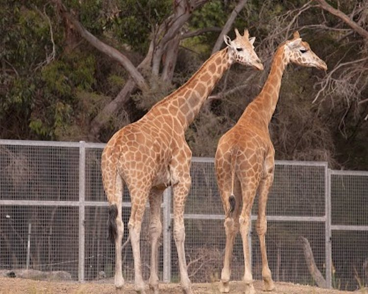 Halls Gap Zoo is a great place to get up close and personal to the animals