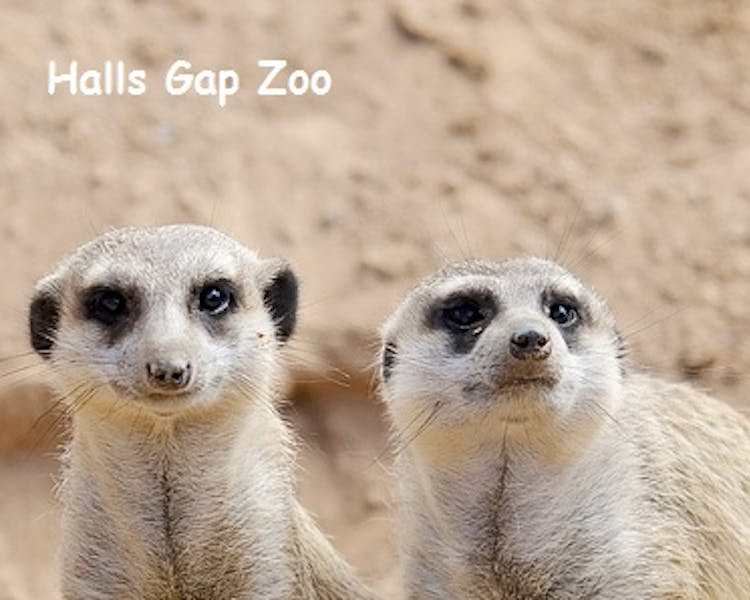 Halls Gap Zoo - Animal Encounters are available