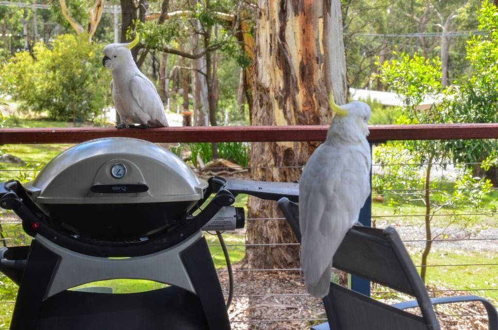 Cockatoos checking out the BBQ at Blue Ridge Retreat