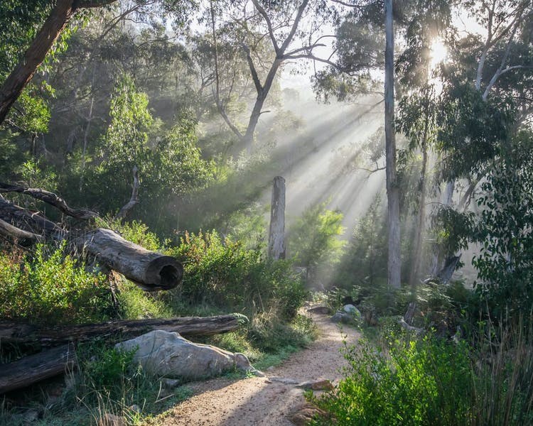 Get close to nature with one of the many bush walks around Halls Gap.