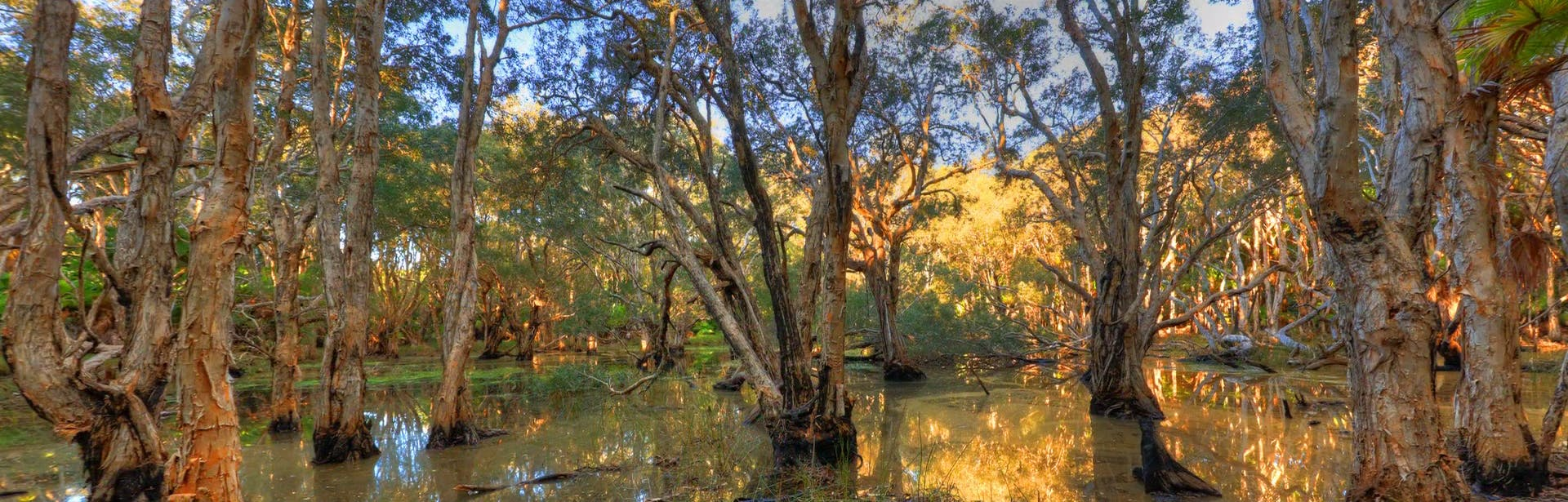 Paperbark Wetlands South West Rocks