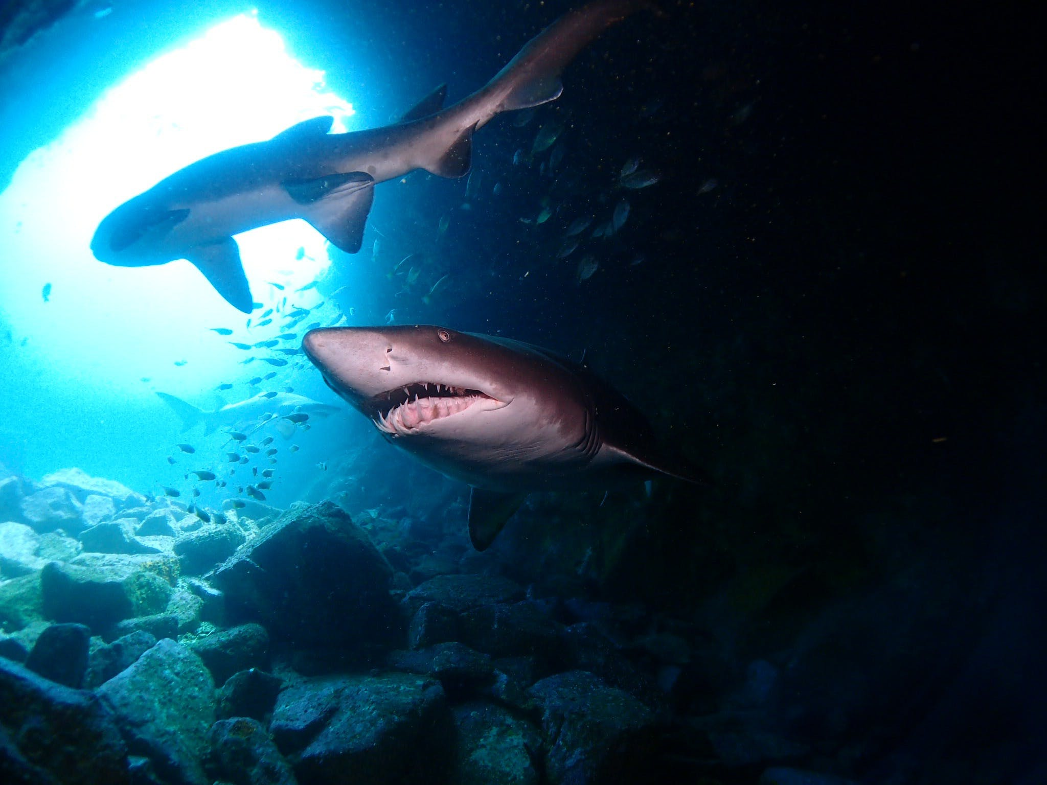 Fish Rock Cave - Shark Diving