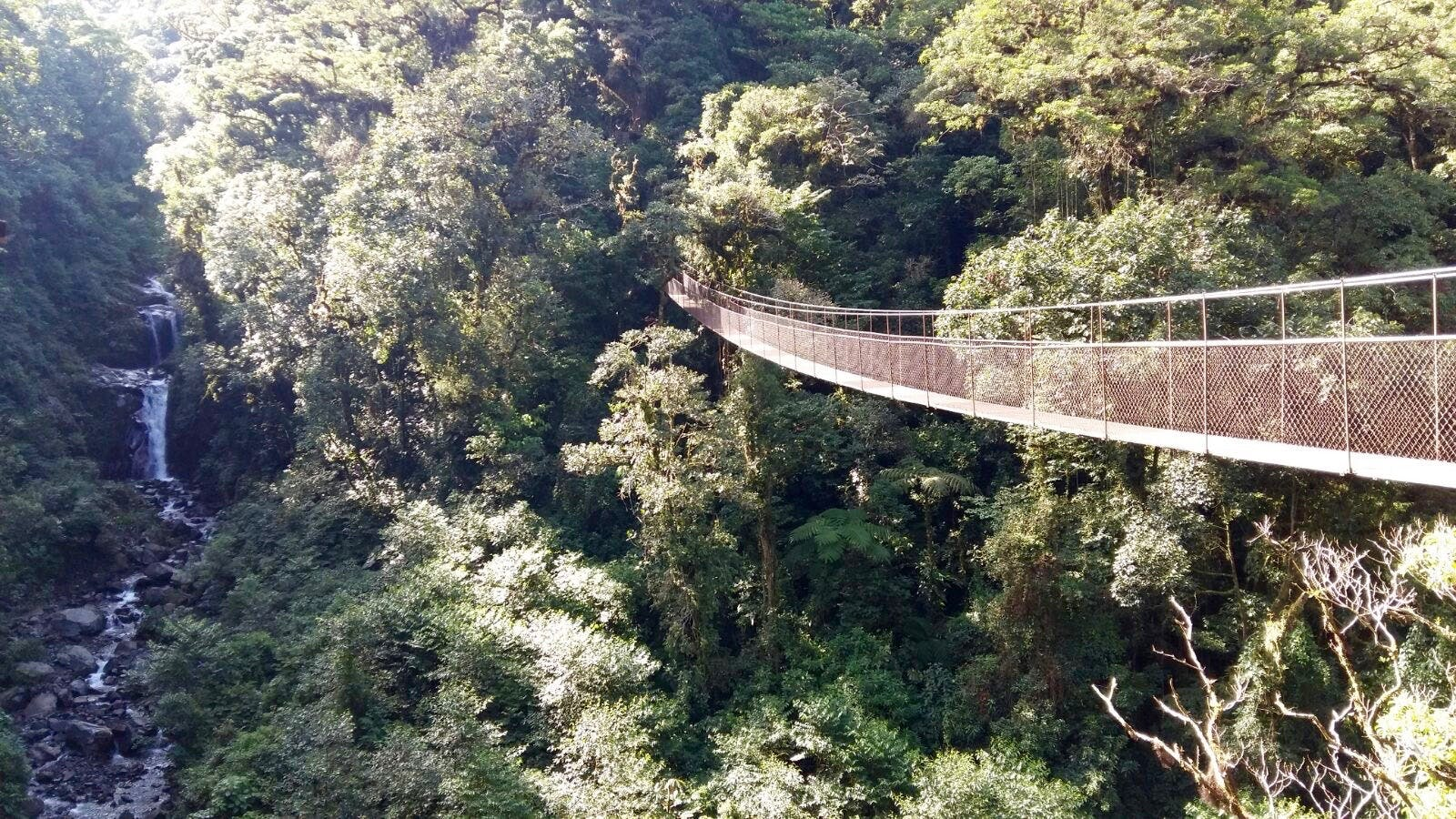 Hanging Bridge Tour