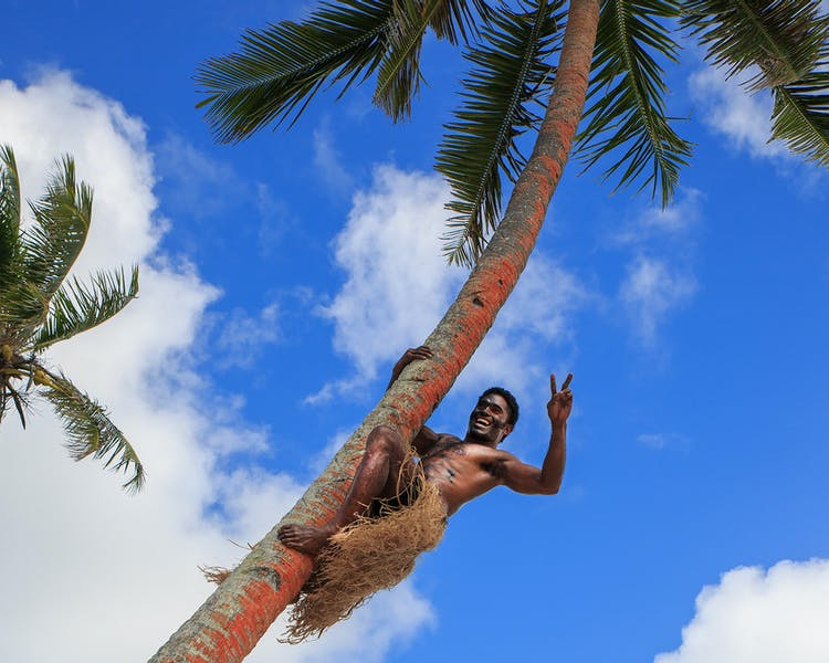 beachfront boutique hotel coral coast fiji coconut tree climbing fresh drink coconut