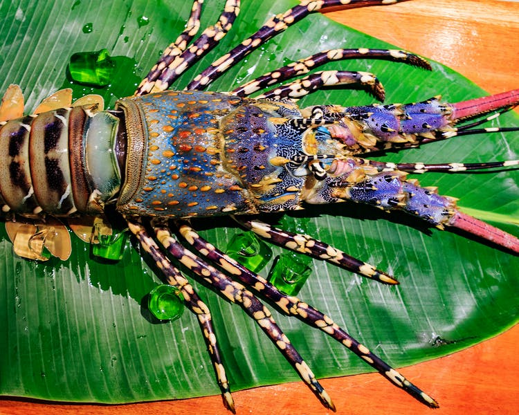 beachfront boutique hotel coral coast fiji fine dining lobster seafood