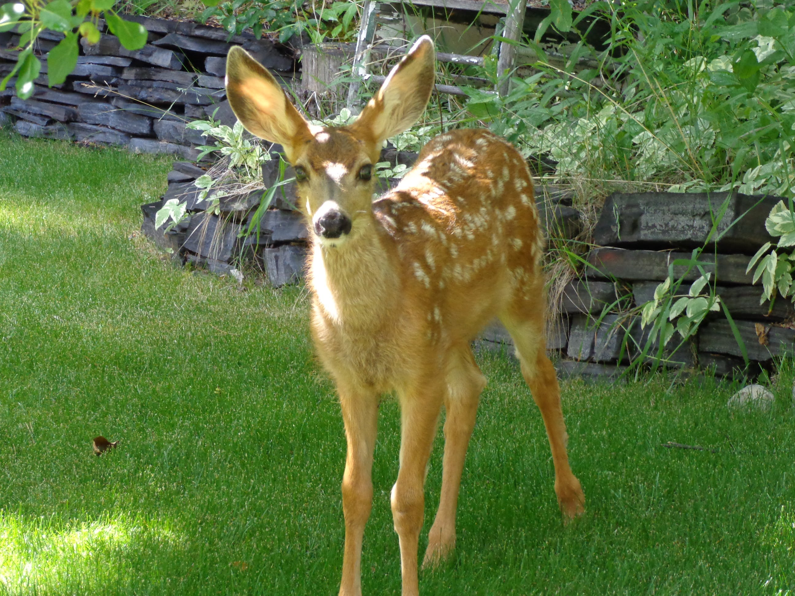 Bambi, our little deer, was born at in the forest behind Ballyrock Home