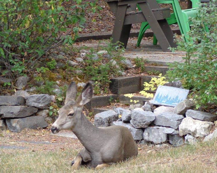 Deer relaxing in the warm sunshine at Ballyrock Home