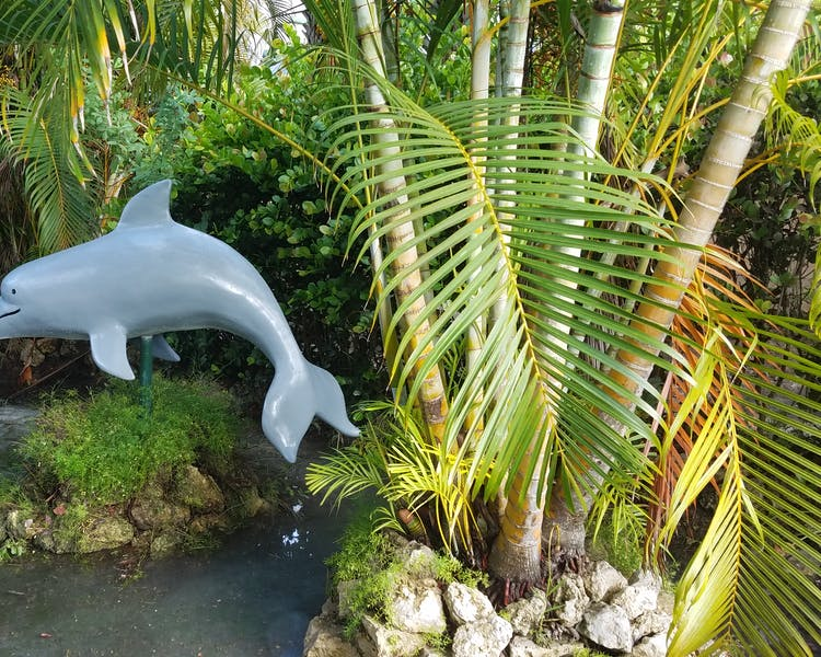 Dolphins frolic in our tropical courtyard garden