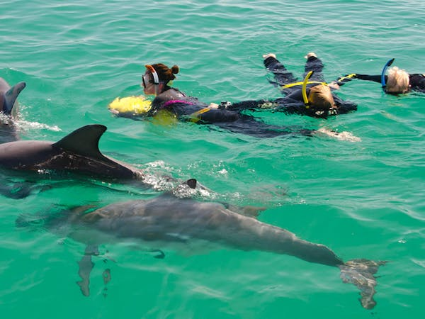 Swim with wild dolphins at Rockingham Wild Encounters