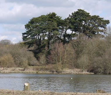 A picturesque view overlooking the lake in the National Trust Hatfield forrest