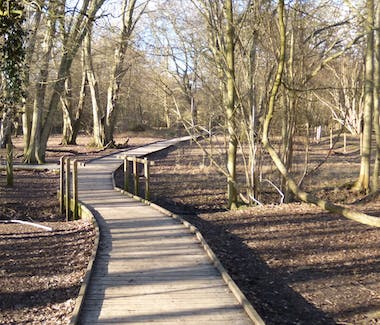 A picture of the great raised walkway through Hatfield Forrest, a National Trust site