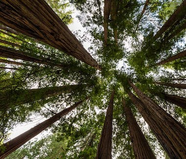 The Dylan Hotel- Tours to Muir Woods