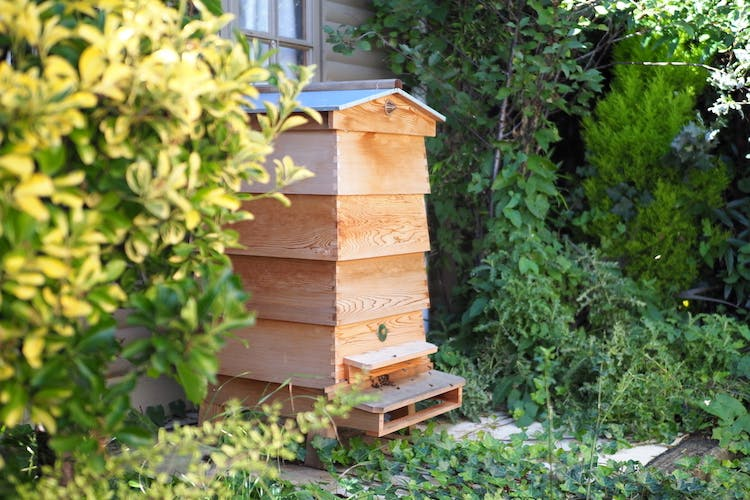 Haven Hall Hotel Beehive