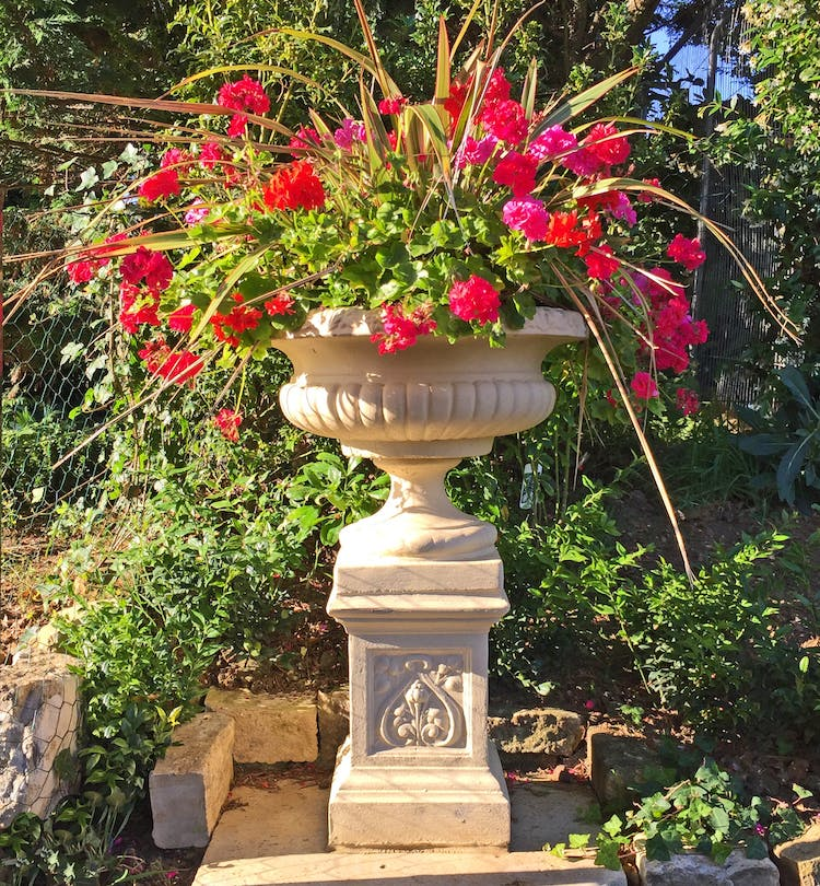 Haven Hall Hotel urn with geraniums