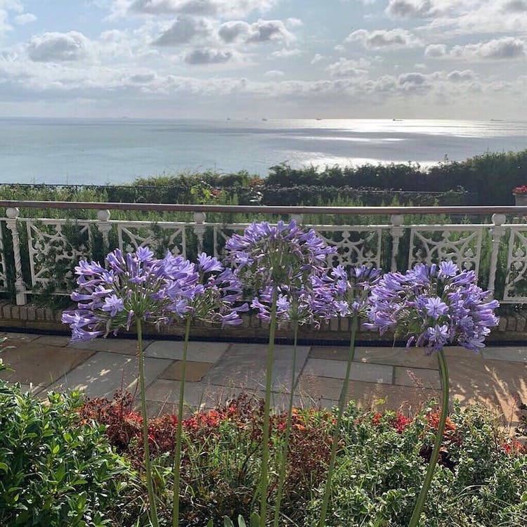 Haven Hall Hotel agapanthus & sea