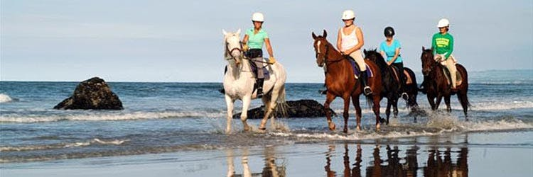 Love Horse riding? We can arrange a tour for you.