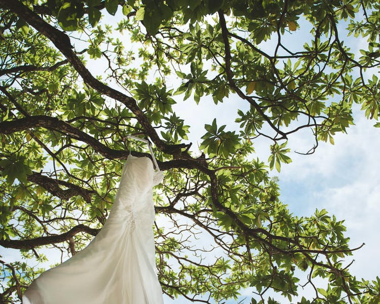 Wedding dress in tropical tree #erakorbeachweddings #weddingceremonyonthebeachsouthpacific #Vanuatutropicalbeachweddings