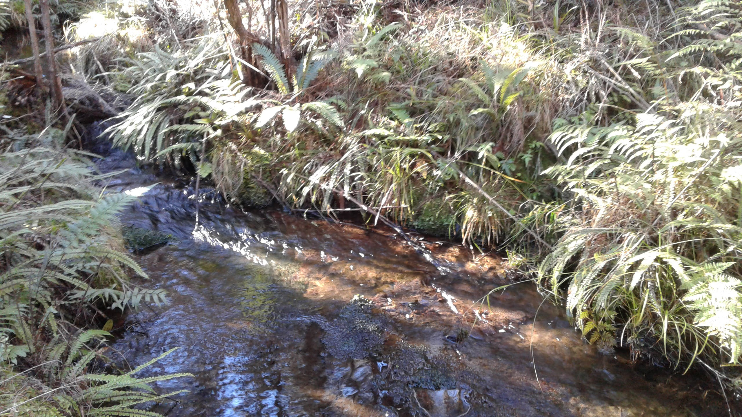 Follow the stream on your walk around the bush block.
