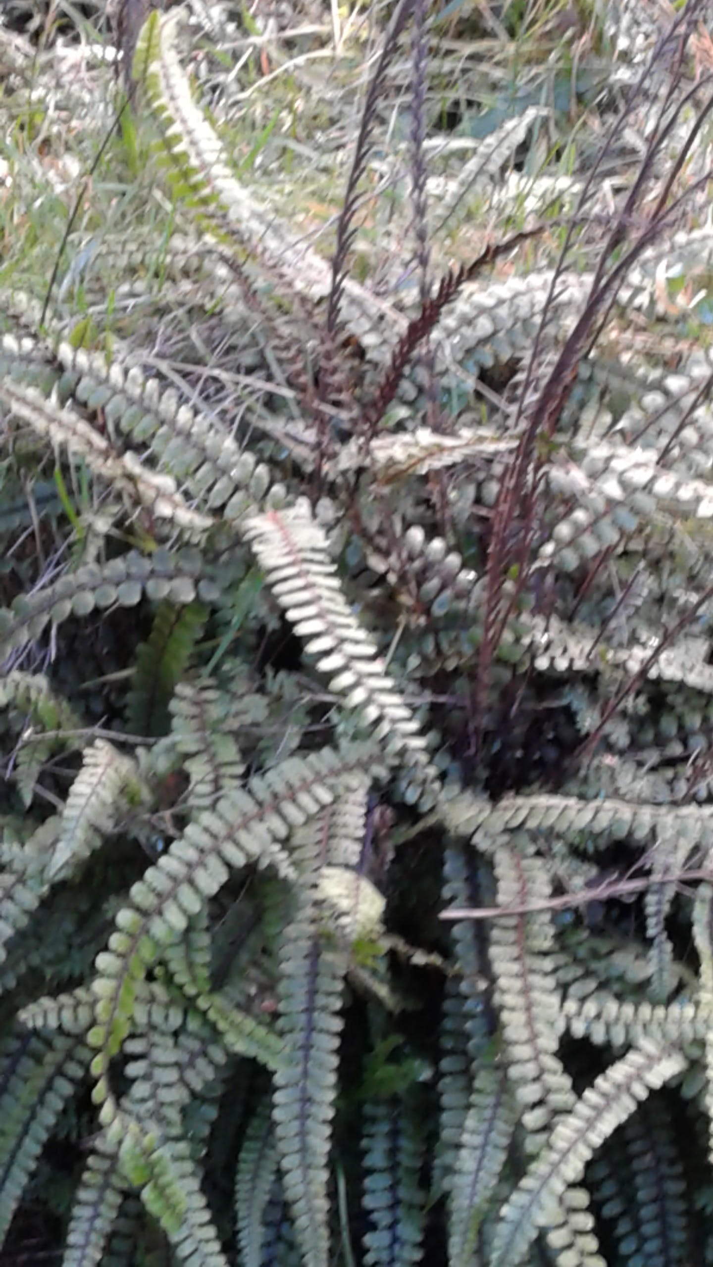 Native ferns on the forest floor.