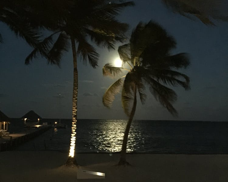 Moonrise over palm trees