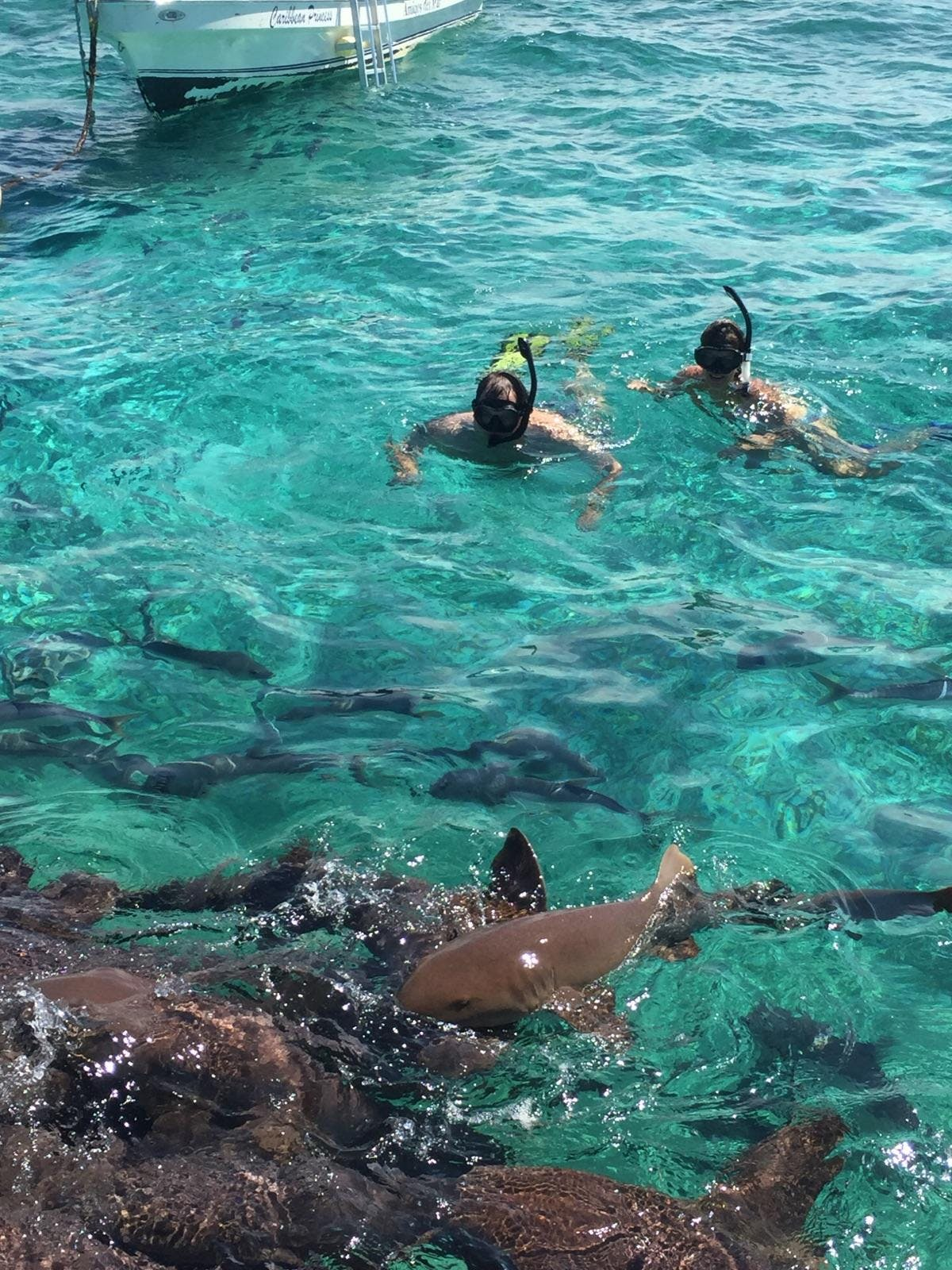 Shark Ray Alley - Swimming with sharks!