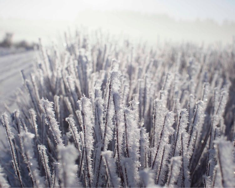 stunning hoar frost picture in Ekeby, Visby, Gotland