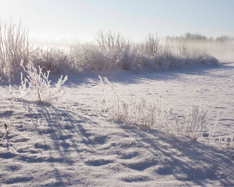 snow hoar and a stunning frost, in Ekeby, Visby, Gotland