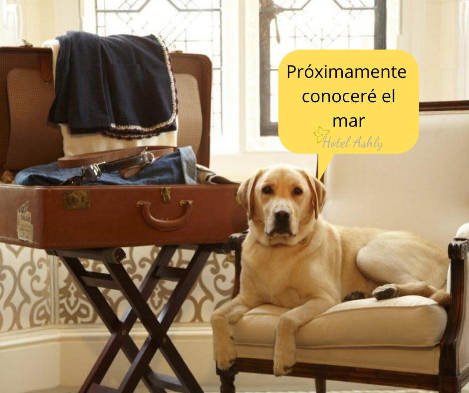 Hotel Ahsly es un Hotel pet friendly