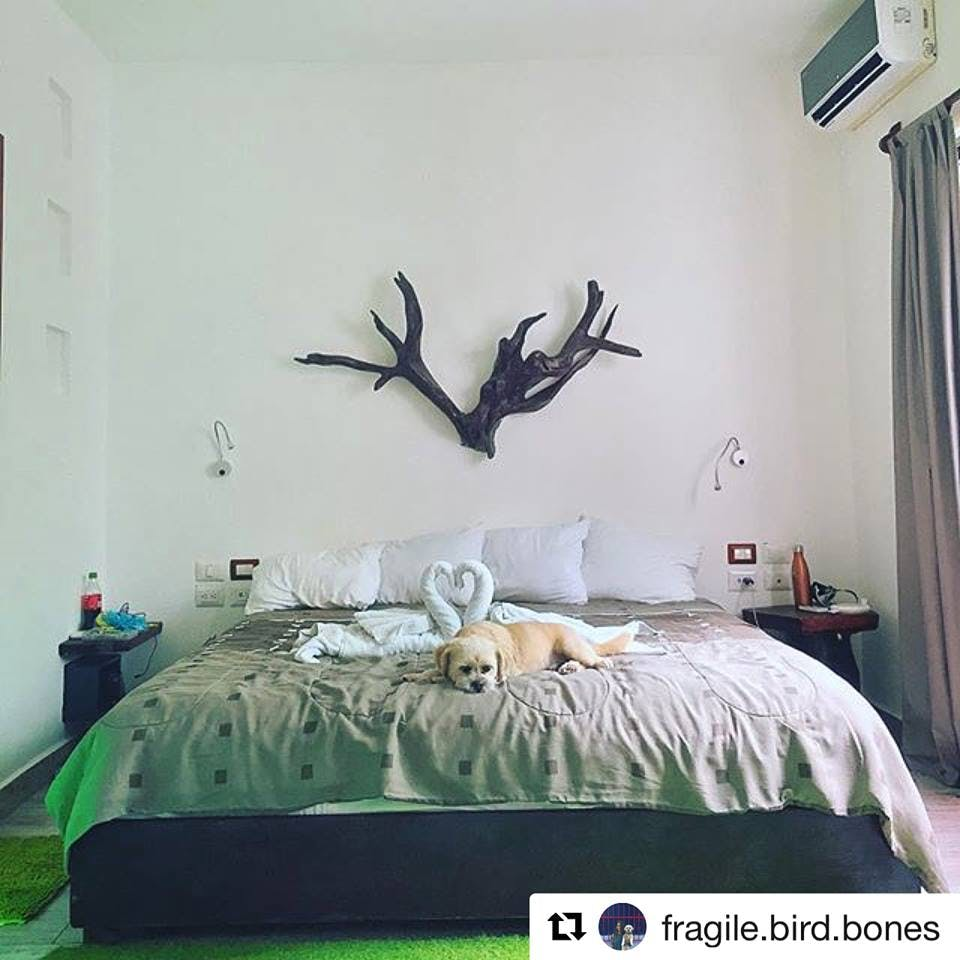dog in a lovely bed, perro en cama adorable