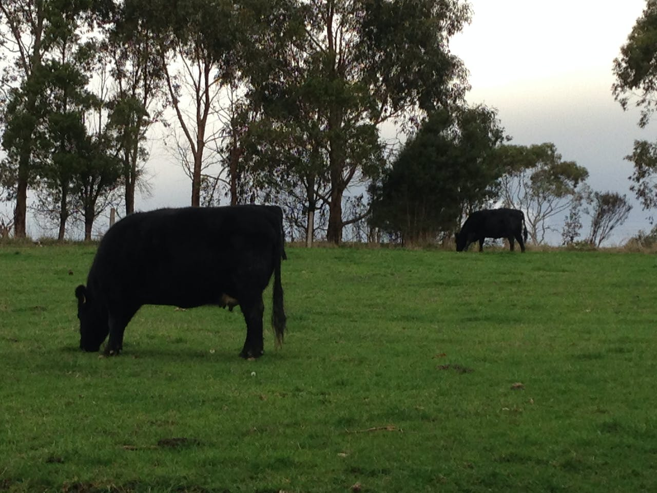 Anderley has 35 acres and friendly cattle for guests to meet