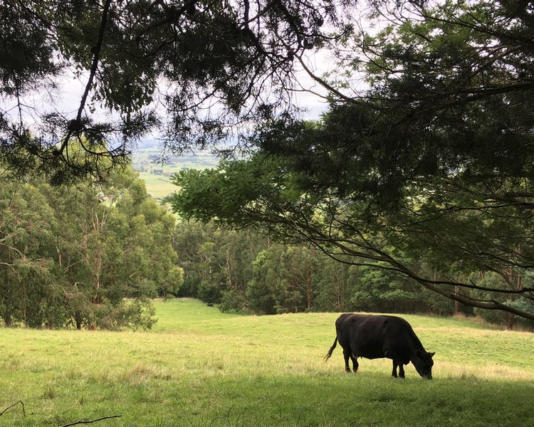 Anderley is on 35 acres and cattle graze near the cottages.