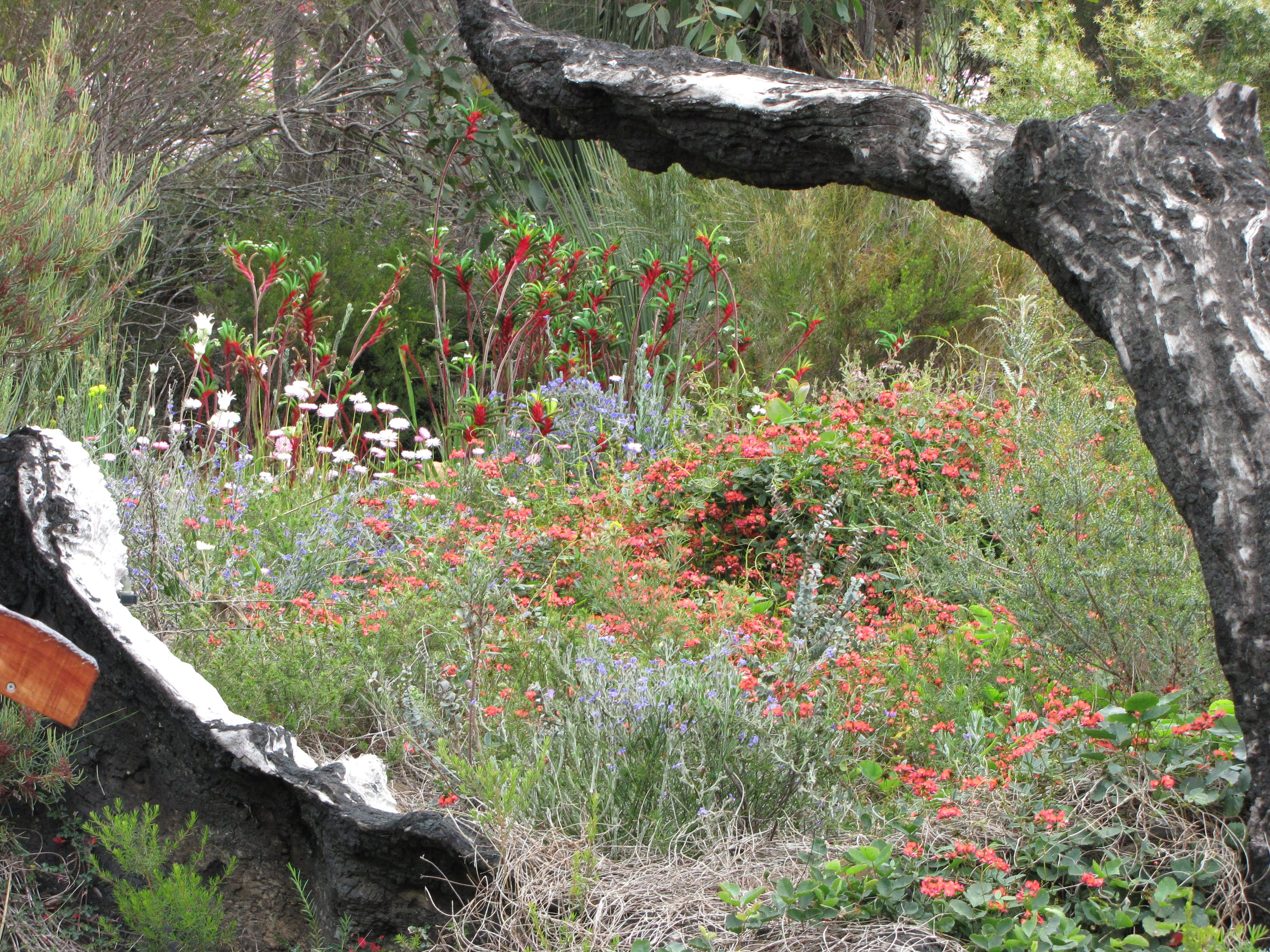 #Australian native plants at Stokes Bay Bush Garden