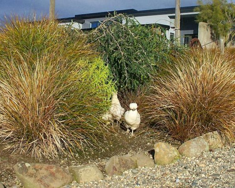 Chickens in the garden The Reservation B&B Gore