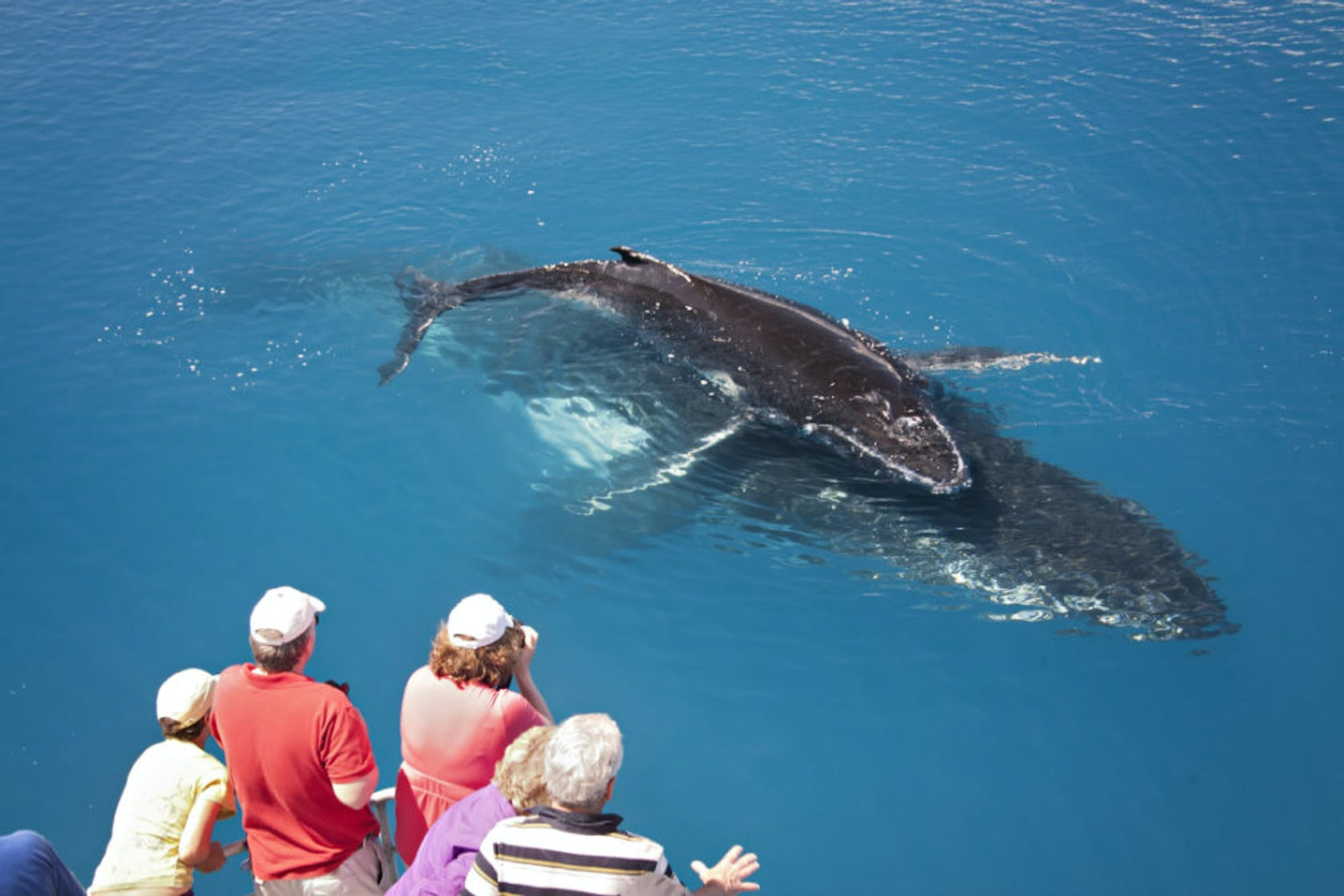 Hervey Bay is the whale watching capital of Australia