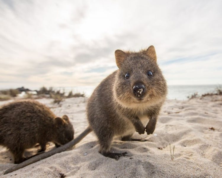 rottnest island special