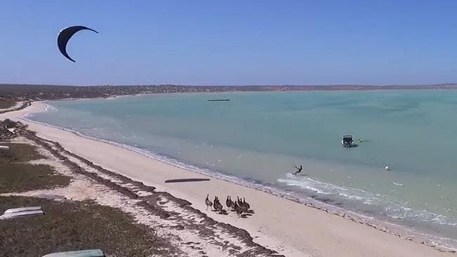 Kite surfing with emus on the Beach