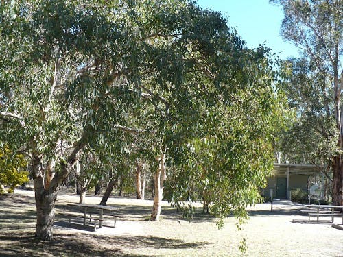 Girraween National Park - great picnic area