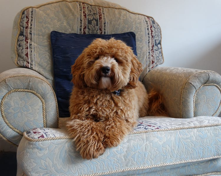 Dog Friendly hotel Berkshire