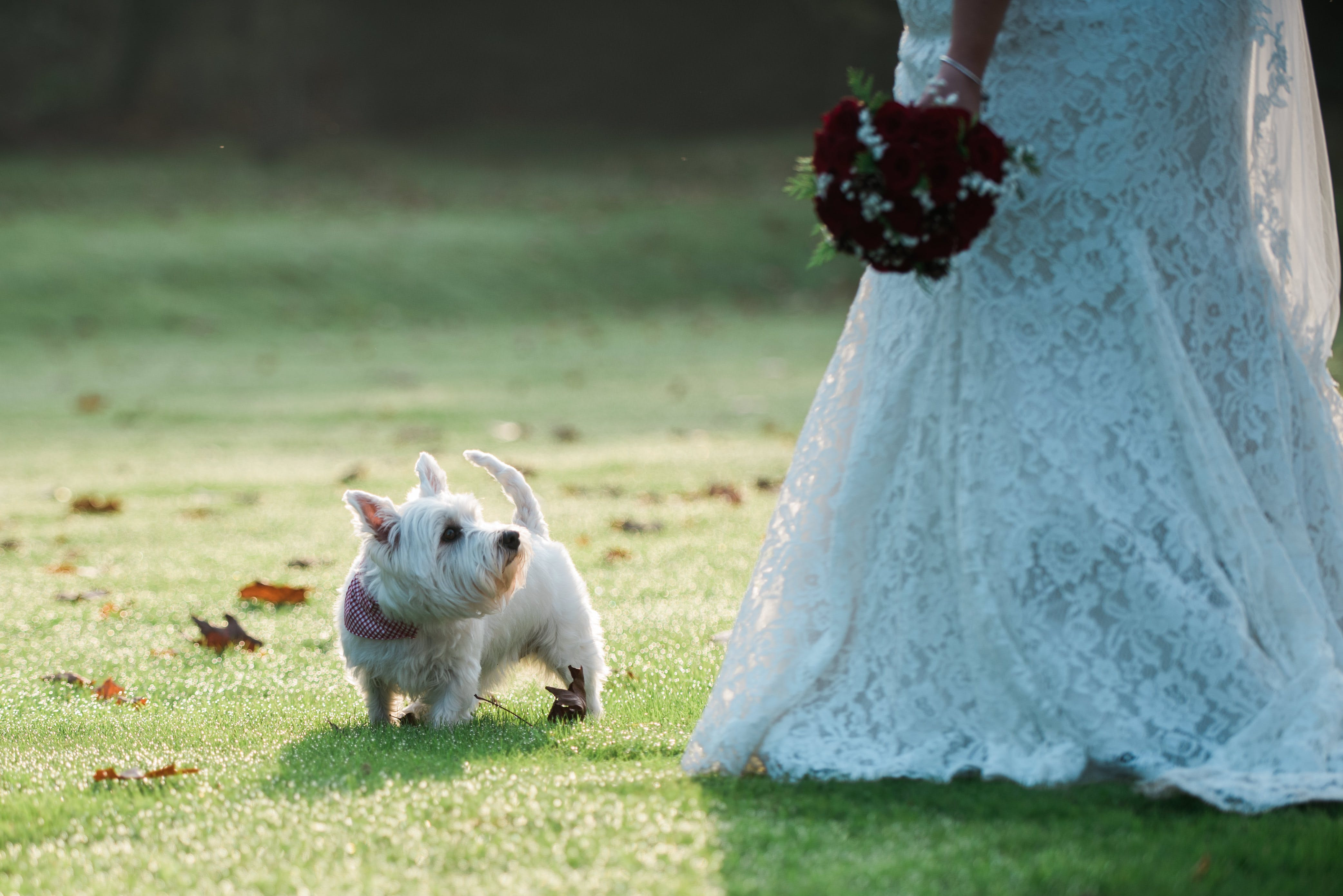 Dog friendly wedding venue, Berkshire