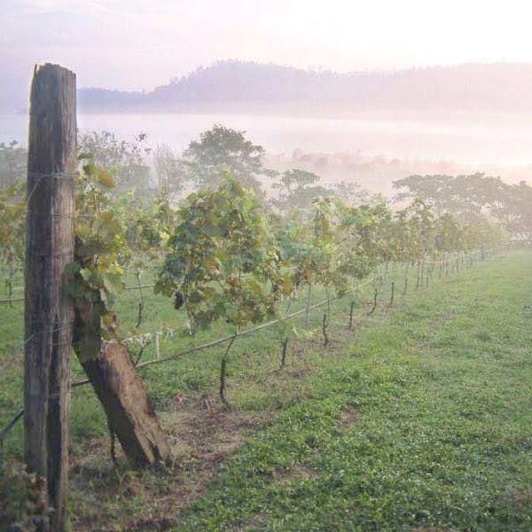 Vineyard, size 600x600