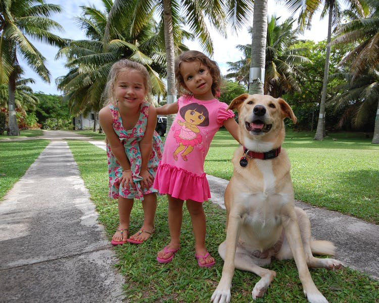 Coco the Resort dog
